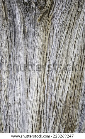 Tree textures with old cracked wood, nature