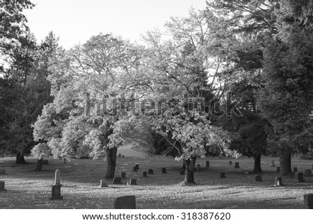 tree,Tombstone and graves in graveyard,Autumn season. - stock photo