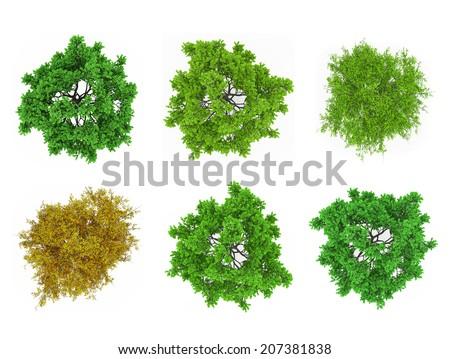Tree tops isolated - stock photo