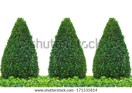 Tree trimming isolate on white background, clipping path included. - stock photo