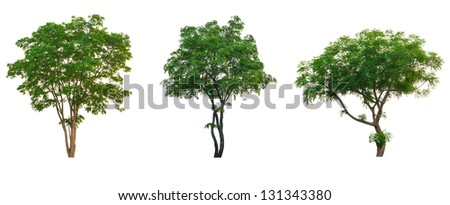 Tree tropical collection set  isolated on white with clipping path - stock photo