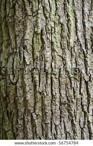 Tree trunk - stock photo