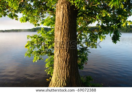 tree trunk and green leaves beside a lake - stock photo