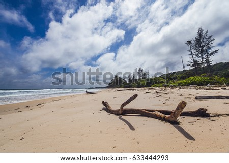 Tree trunk buried on the sand in a beach in Pulau Bintan, Indonesia, in a very sunny day.