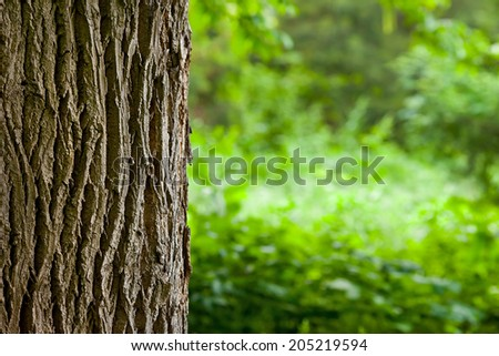 tree trunk close up with  blurred green background - stock photo