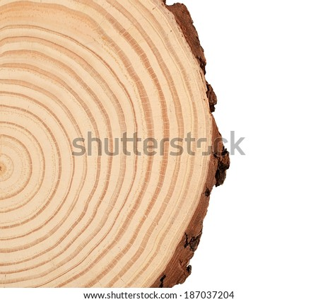 Tree trunk cross section - stock photo