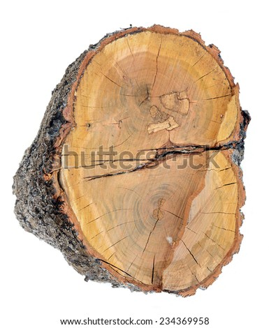 tree trunk cross section isolated on white - stock photo