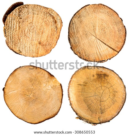 tree trunk cross section set, isolated on white, clipping path included