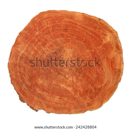 Tree trunk isolated on white