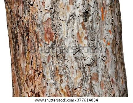 tree trunk isolated on white background, wood pine