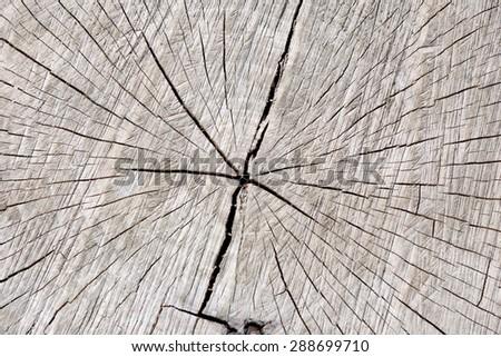 Tree trunk underground with wood grain / Background - stock photo