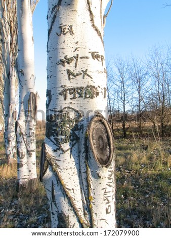 Tree trunk with carved words on a bark - stock photo