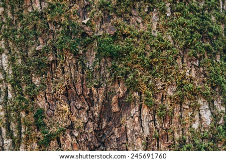 Tree trunk with green moss, texture, nature background - stock photo