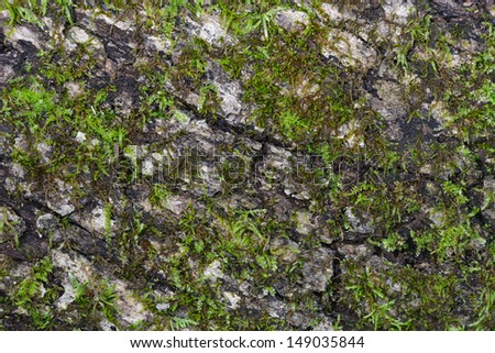 Tree trunk with moss details - stock photo