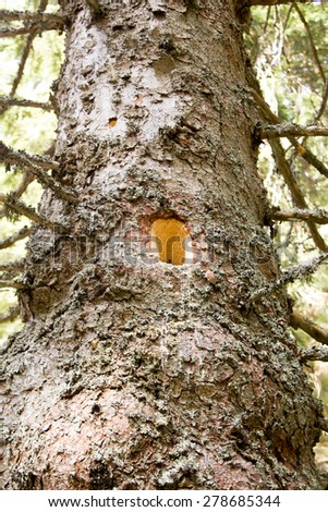 Tree trunk with multiple holes - stock photo