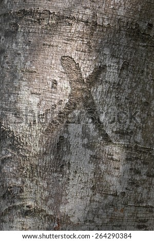tree trunk with x mark - stock photo
