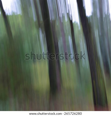 Tree trunks abstract nature landscape motion blur in pine forest. - stock photo