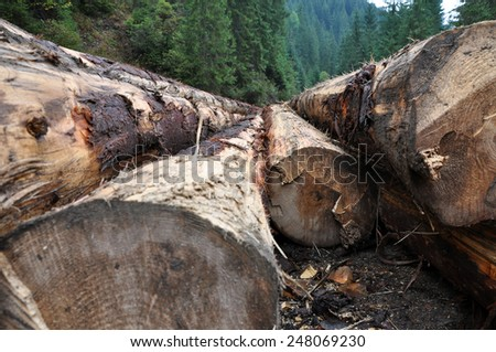 Tree trunks felled and stored for the industry - stock photo