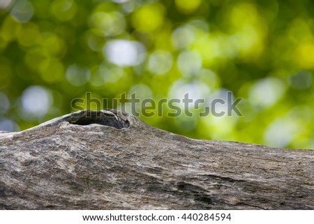 Tree trunks on natural background.