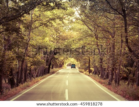 Tree tunnel above the road with single car driving away