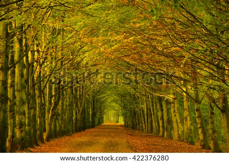 Tree tunnel consisting of beech trees along a path in a forest with changing color of the foliage at the season change from summer to fall in the Netherlands. - stock photo