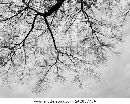Tree Twigs Silhouette - stock photo