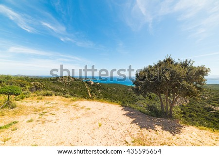 tree under a blue sky in Sardinia, Italy