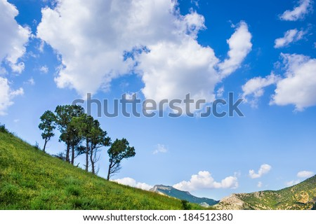 Tree under a blue sky with clouds  - stock photo