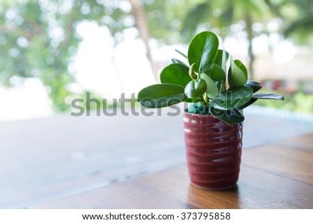 Tree vase on the dining table. Small tree vase on the dining table of the restaurant. - stock photo
