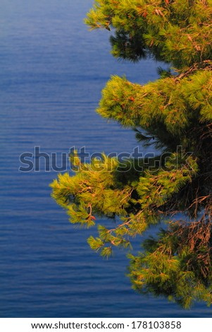 Tree vegetation and blue water of Mediterranean sea in the background - stock photo