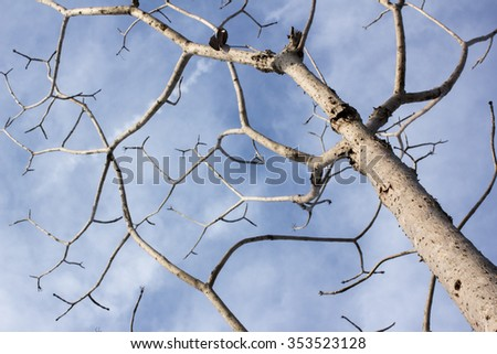 tree wallpaper dirty aged nobody park dead background - stock photo