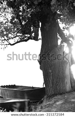 Tree which tied the boat - stock photo