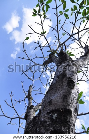 tree with blue cloud background is helpful global warming - stock photo
