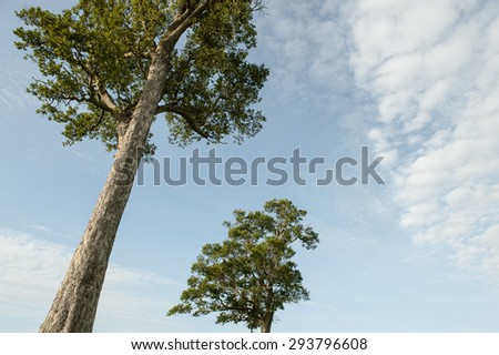 Tree with cloudy sky - stock photo