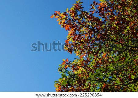 tree with colorful autumn leaves under a blue sky with copy space - stock photo