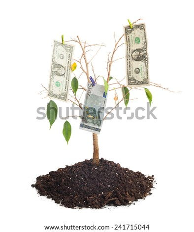 Tree with few money leaves isolated on white background - stock photo