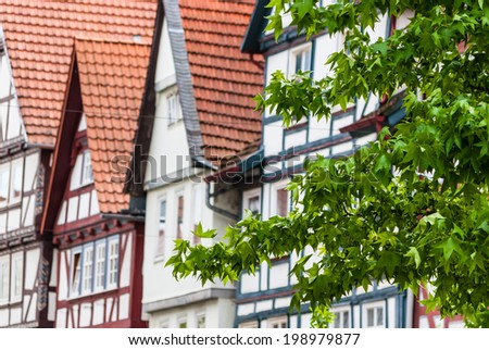 Tree with green leaves in front of half-timbered buildings in Germany.