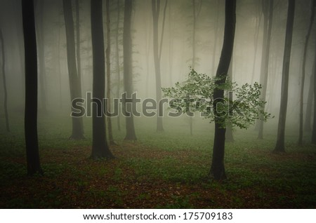 tree with green leaves in green forest with fog in summer