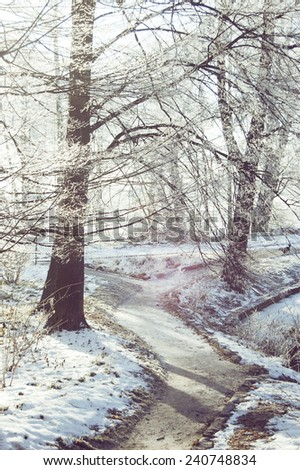 Tree with hoarfrost on the branches near a dirt road, the sun is shining, the shadow, the road turns,  - stock photo