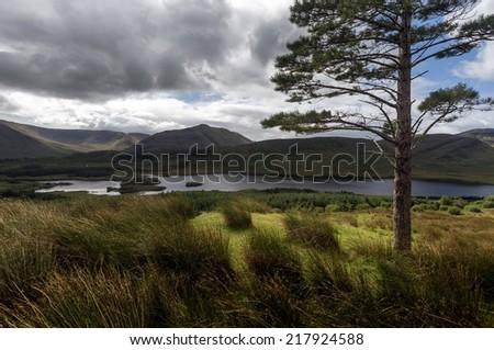Tree with lake in Ireland - stock photo