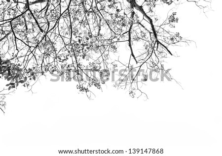 Tree with leaves against white background - stock photo