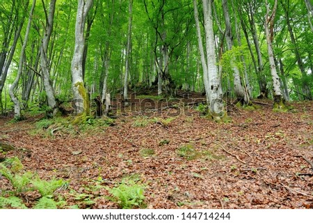 Tree with moss on roots in forest - stock photo