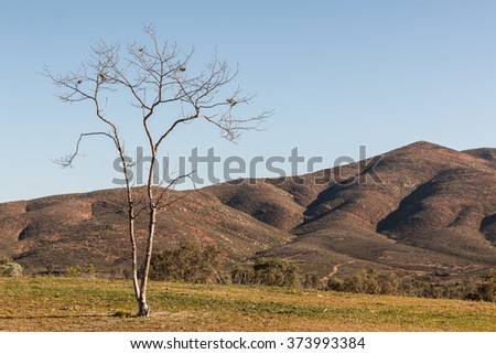 Tree with mountain in background at Lower Otay Lake in Chula Vista, California. - stock photo