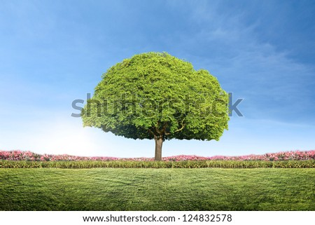 tree with new leaf growth Green landscape - stock photo