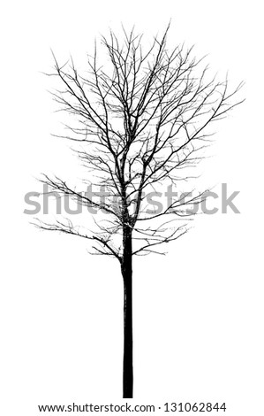 Tree with no leafs - stock photo