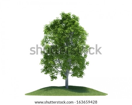 Tree with small grass hill isolated on white background