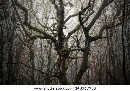 tree with twisted branches in a dark forest - stock photo