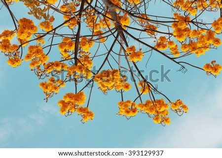 Tree with yellow flower background