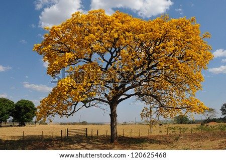 tree with yellow flowers - stock photo