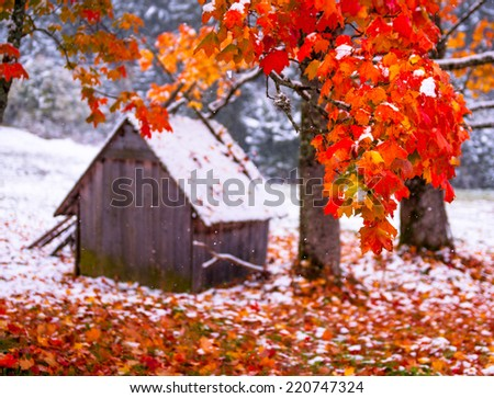 Tree with yellow leaves in the mountains - stock photo